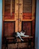 De luie kat Royalty-vrije Stock Foto's