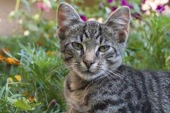 De luie kat zit in bloemen Stock Fotografie