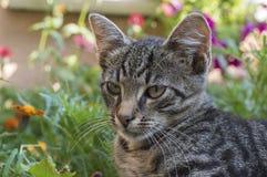De luie kat zit in bloemen Royalty-vrije Stock Afbeelding