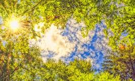 De luifel van bomen die een duidelijke blauwe hemel met de zon ontwerpen die door glanzen Royalty-vrije Stock Foto's
