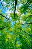 De luifel van de boom Stock Foto