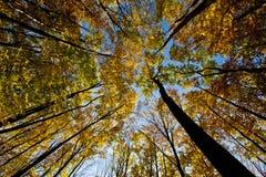 De luifel van de boom. Royalty-vrije Stock Afbeeldingen