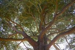 De Luifel van de boom stock afbeeldingen