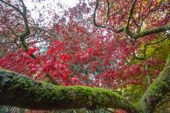 De luifel van de de herfstboom Royalty-vrije Stock Foto's