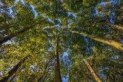 De luifel van de de zomerboom Stock Afbeelding