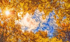 De luifel van de herfstbomen die een duidelijke blauwe hemel met de zon ontwerpen die door glanzen Royalty-vrije Stock Foto