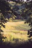 De luifel van lange bomen die een de zomer zonnige weide, met de zon ontwerpen die door glanzen Royalty-vrije Stock Foto's