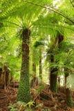 De Luifel van Treefern stock afbeelding