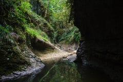 De luim gevormde canion van de bergrivier in hart van wilde het meest greenforest Royalty-vrije Stock Foto