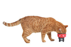 De Lunch van het katje stock afbeelding