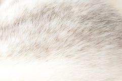 De luxueuze textuur van het minkbont stock fotografie