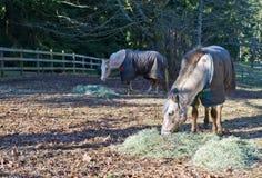 De Luzerne van het Weiland van het paard royalty-vrije stock afbeelding