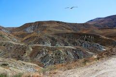 De mångfärgade baksidorna av bergen är brunt och grå färger som är dolda med gles vegetation Värme torka En ensam fiskmås flyger  arkivfoton