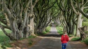 De mörka häckarna - ett berömt läge i nordligt - Irland stock video