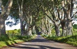 De mörka häckarna, gammal aveny av bokträdträd, Armoy, Antrim som är nordlig - Irland Royaltyfri Foto