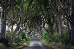 De mörka häckarna som är nordliga - Irland arkivfoton