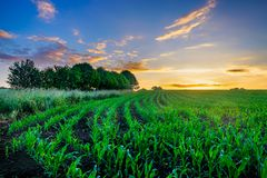 De Maïsgebied van Normandië royalty-vrije stock foto