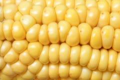 De maïskolf van de maïs Stock Foto