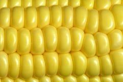 De maïskolf van de maïs royalty-vrije stock foto's