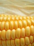 De maïskolf van de maïs Stock Afbeelding