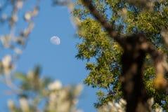 De maan door de bladeren Stock Afbeeldingen