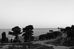 de maan en de bomen stock afbeeldingen