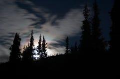 De maan over het bos, Kyrgzstan Stock Afbeeldingen