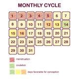 De maandelijkse cyclus van een vrouw Menstruatie en ovulatie Planningszwangerschap en familie Dagen gunstig voor conceptie vector illustratie