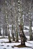De Maart-lente thaw_6 Royalty-vrije Stock Fotografie
