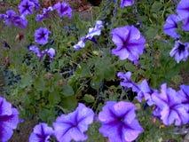 De macht van de bloem Stock Foto's
