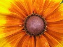 De macht van de bloem. Royalty-vrije Stock Foto