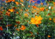 De macht van de bloem stock foto