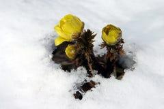 De Macht van de bloem Royalty-vrije Stock Foto's