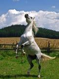 De macht van het paard Stock Fotografie