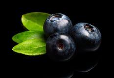 De macro de bosbessenbladeren van de close-upmening isoleerden zwarte Stock Fotografie