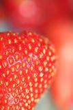 De macro van aardbeien Stock Foto
