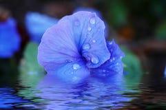 De macro van de bloem Stock Foto's