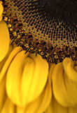 De macro van de bloem stock foto