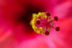 De macro van de bloem Stock Afbeelding