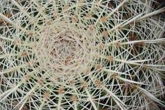 De macro van de cactus Stock Foto
