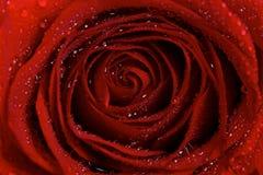 De macro van de Druppeltjes van de Dauw van Water op een Rood nam toe Royalty-vrije Stock Afbeelding