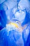 De macro van de iris Royalty-vrije Stock Foto