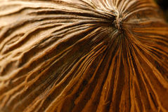 De macro van de kokosnoot Stock Foto's