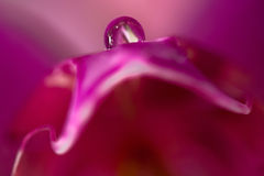 De macro van de orchidee Royalty-vrije Stock Afbeelding