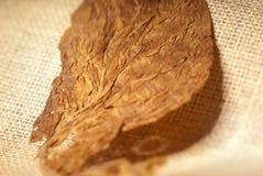 De macro van de tabak Royalty-vrije Stock Fotografie