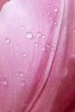 De Macro van de tulp Stock Afbeelding
