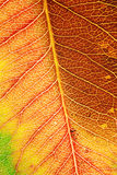 De Macro van het Blad van de herfst Royalty-vrije Stock Foto's