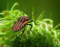 De macro van het insecteninsect stock afbeeldingen