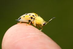 De macro van insecten Stock Afbeeldingen