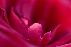 De macro van rood nam toe royalty-vrije stock fotografie